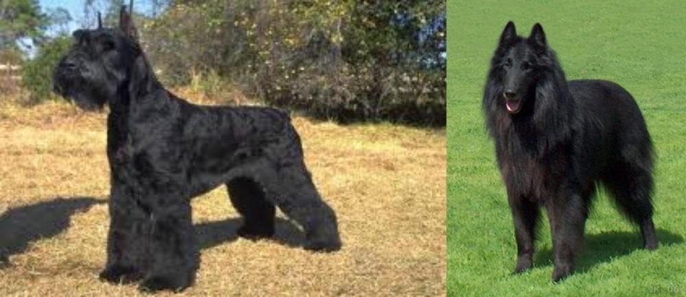Giant Schnauzer vs Belgian Shepherd Dog (Groenendael)