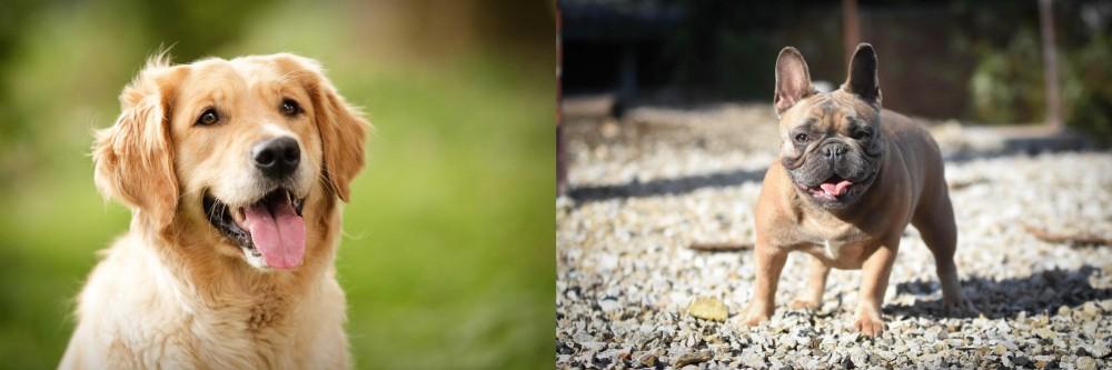 French Bulldog vs Golden Retriever