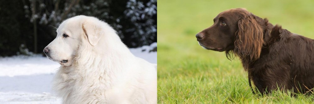 Great Pyrenees vs German Longhaired Pointer