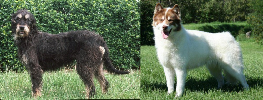 Griffon Nivernais vs Canadian Eskimo Dog
