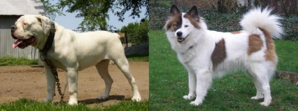 Hermes Bulldogge vs Elo