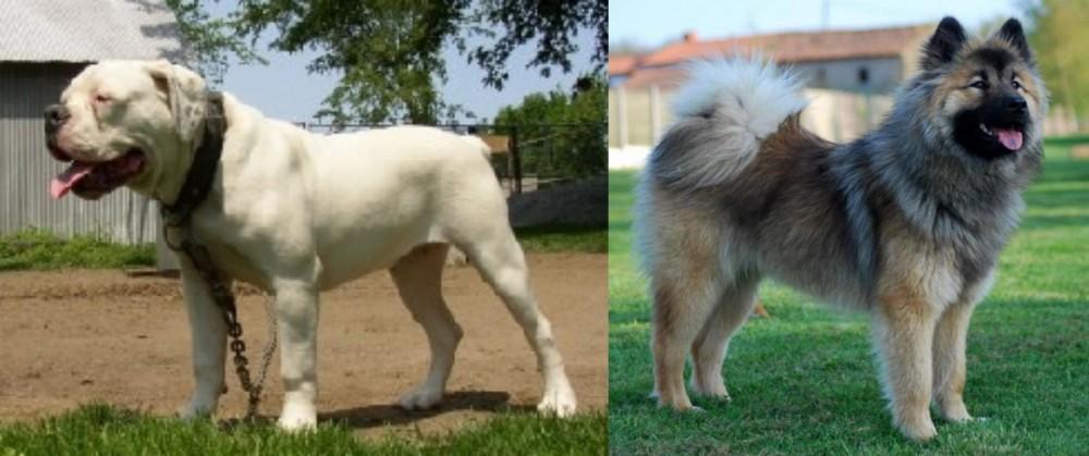 Hermes Bulldogge vs Eurasier