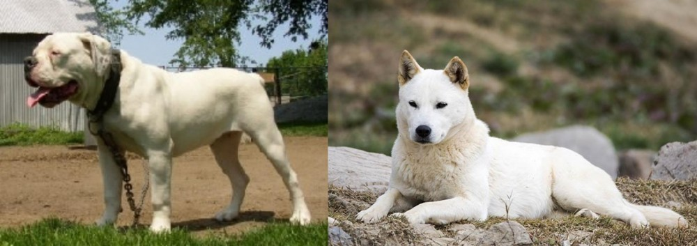 Hermes Bulldogge vs Jindo