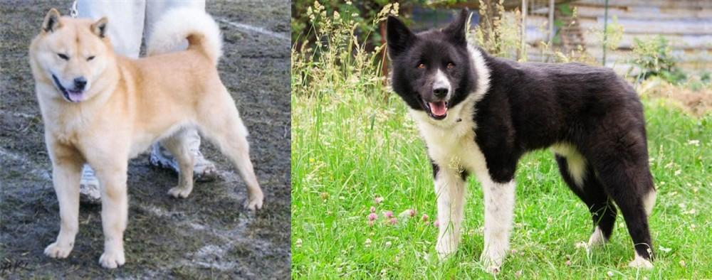 Hokkaido vs Karelian Bear Dog