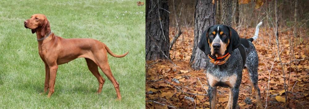Hungarian Vizsla vs Bluetick Coonhound