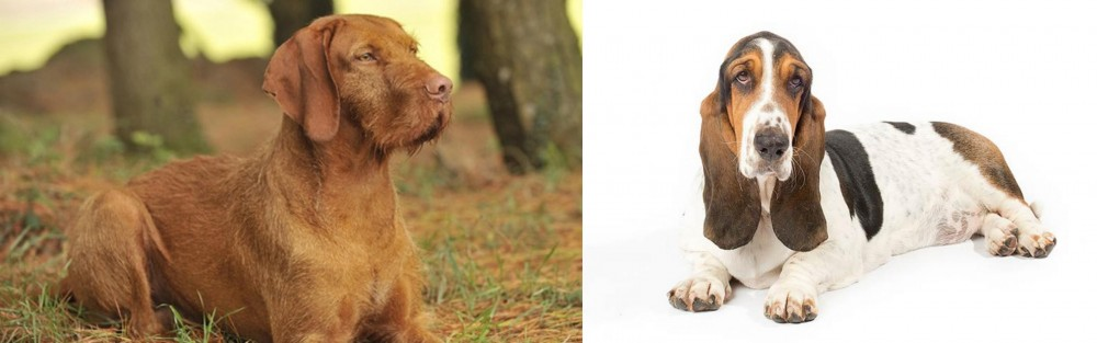 Hungarian Wirehaired Vizsla vs Basset Hound