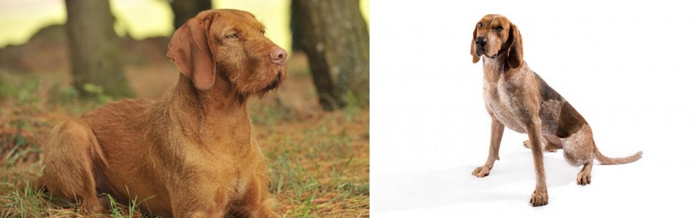 Hungarian Wirehaired Vizsla vs English Coonhound