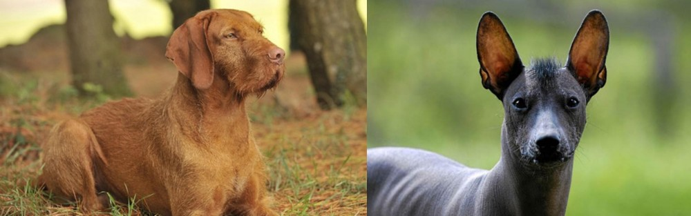 Hungarian Wirehaired Vizsla vs Mexican Hairless