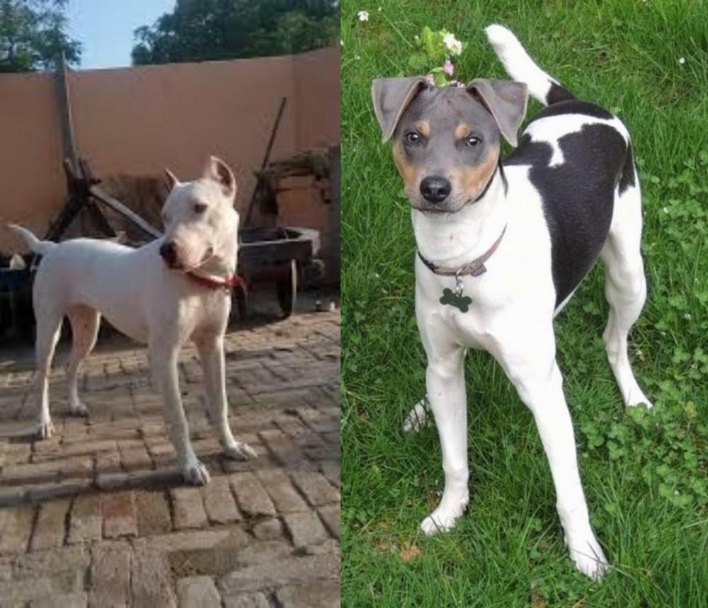 Indian Bull Terrier vs Brazilian Terrier