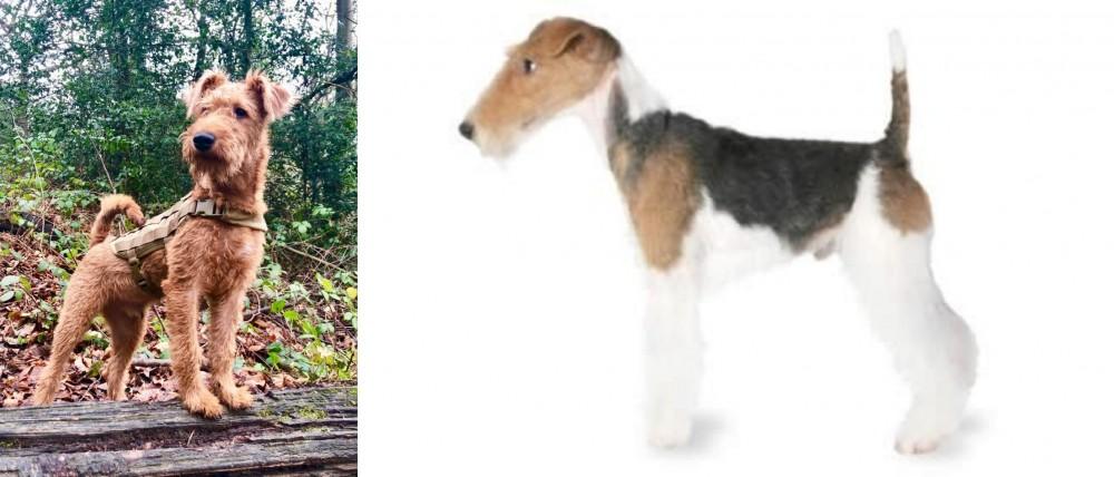 Irish Terrier vs Fox Terrier