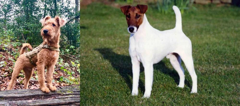 Irish Terrier vs Fox Terrier (Smooth)