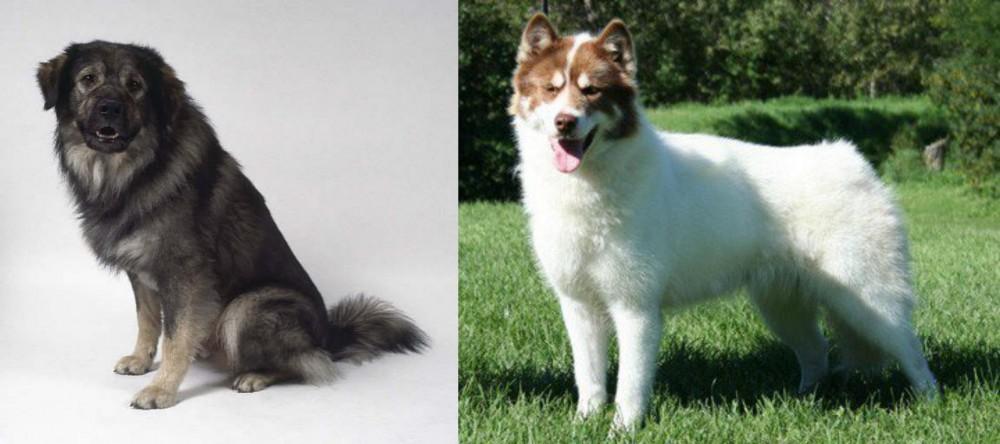 Istrian Sheepdog vs Canadian Eskimo Dog