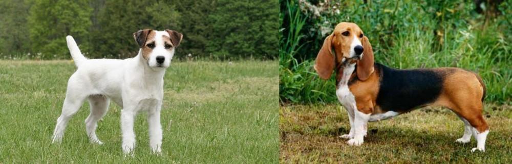 Jack Russell Terrier vs Basset Artesien Normand