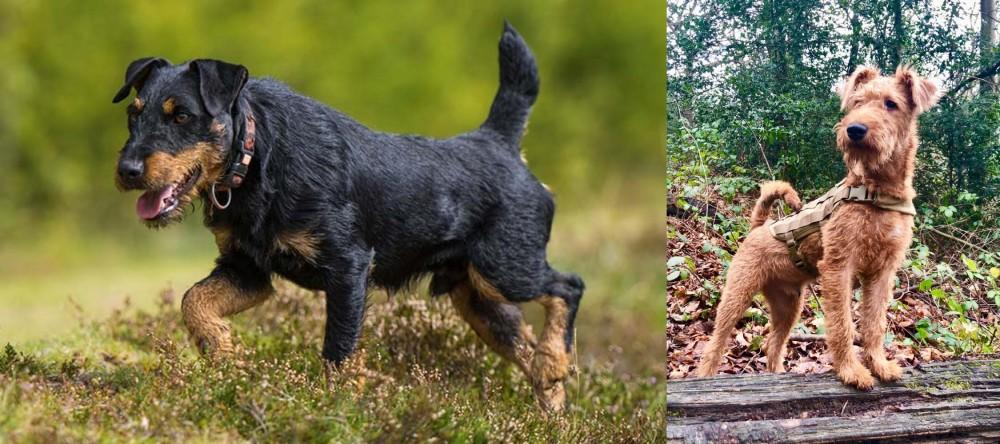 Jagdterrier vs Irish Terrier