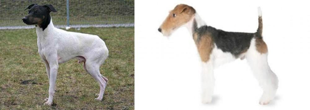 Japanese Terrier vs Fox Terrier