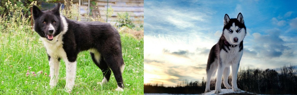 Karelian Bear Dog vs Alaskan Husky