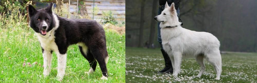 Karelian Bear Dog vs Berger Blanc Suisse