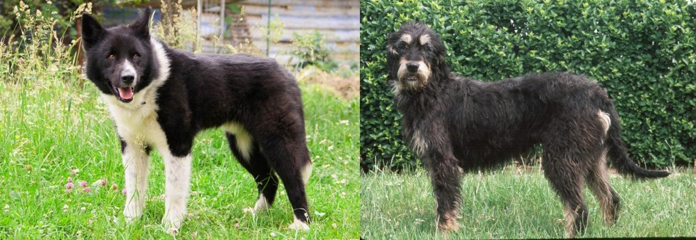 Karelian Bear Dog vs Griffon Nivernais