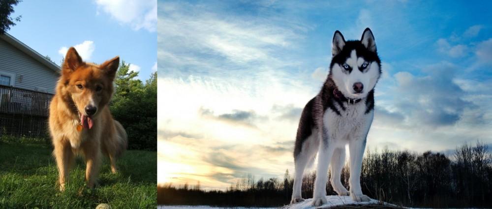 Karelo-Finnish Laika vs Alaskan Husky