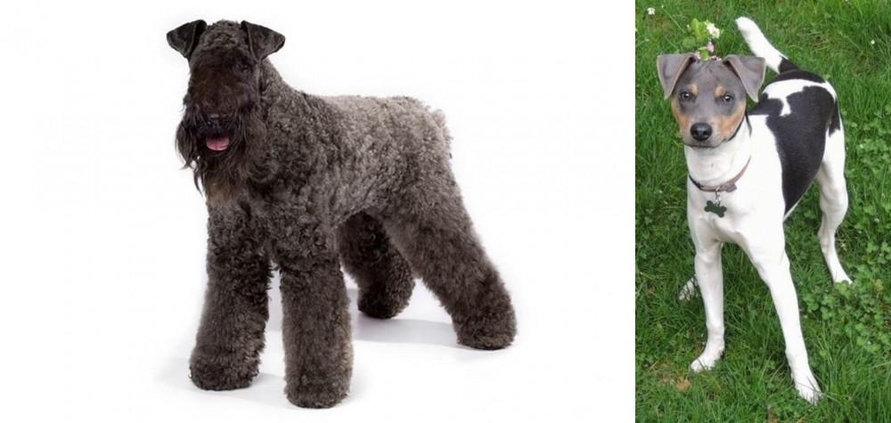 Kerry Blue Terrier vs Brazilian Terrier