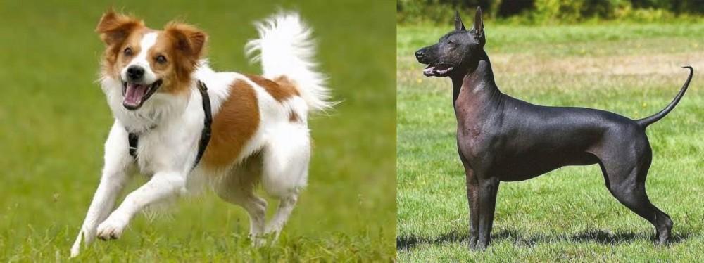 Kromfohrlander vs Hairless Khala