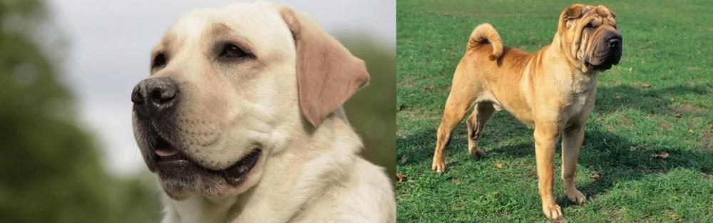Chinese Shar Pei vs Labrador Retriever