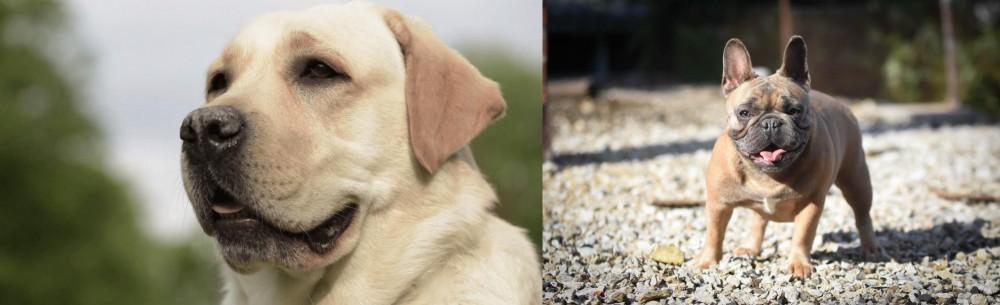 French Bulldog vs Labrador Retriever