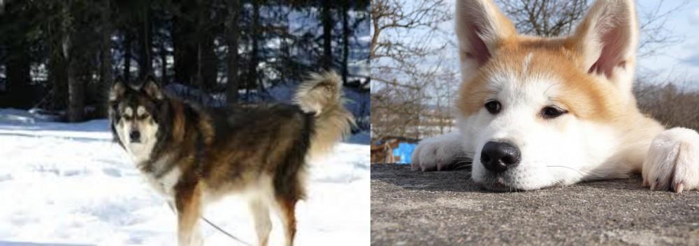 Mackenzie River Husky vs Akita