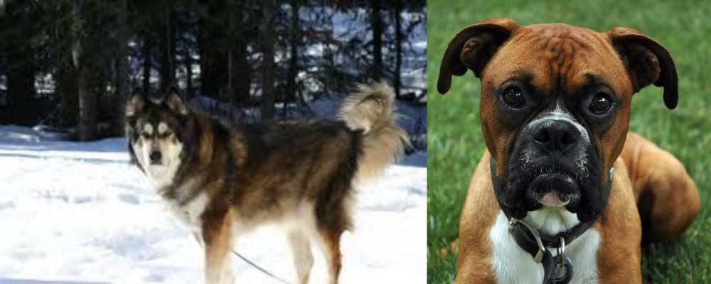 Mackenzie River Husky vs Boxer