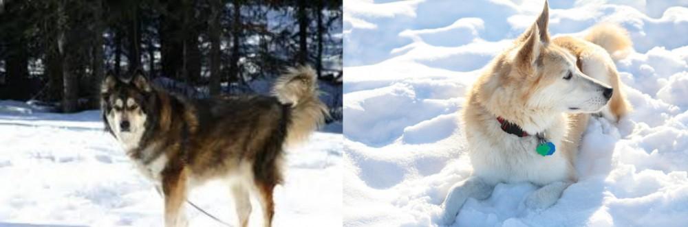 Mackenzie River Husky vs Labrador Husky