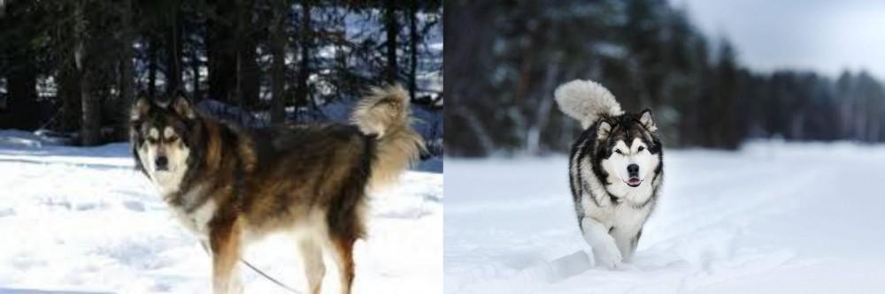 Mackenzie River Husky vs Siberian Husky