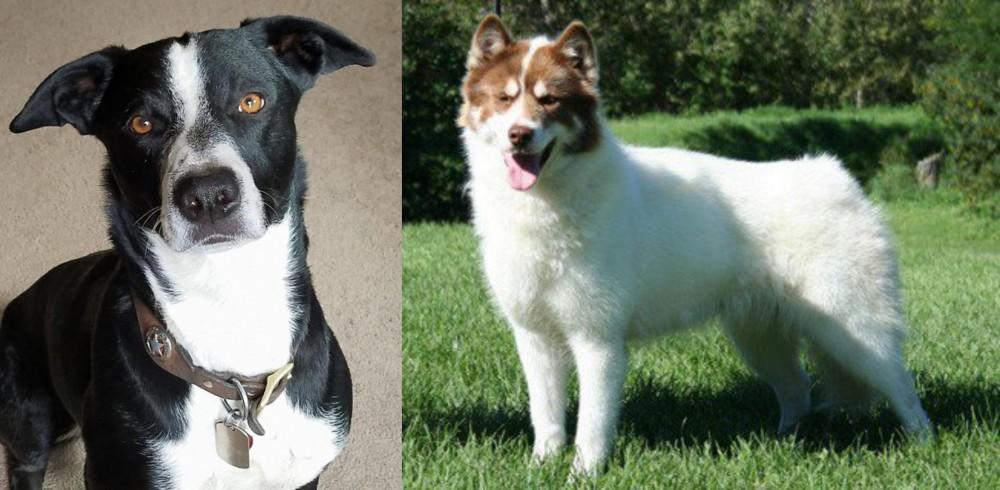 McNab vs Canadian Eskimo Dog