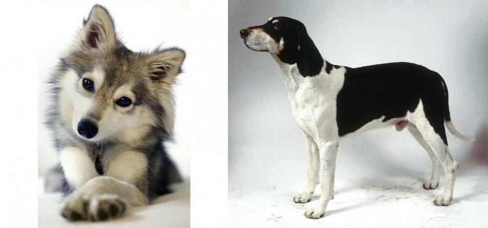 Miniature Siberian Husky vs Francais Blanc et Noir