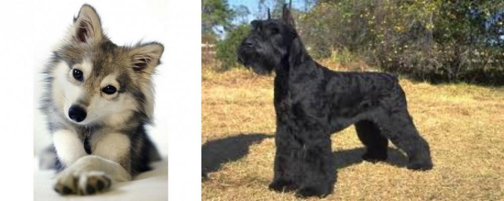 Miniature Siberian Husky vs Giant Schnauzer