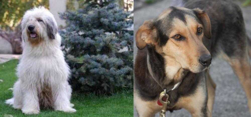 Mioritic Sheepdog vs Huntaway