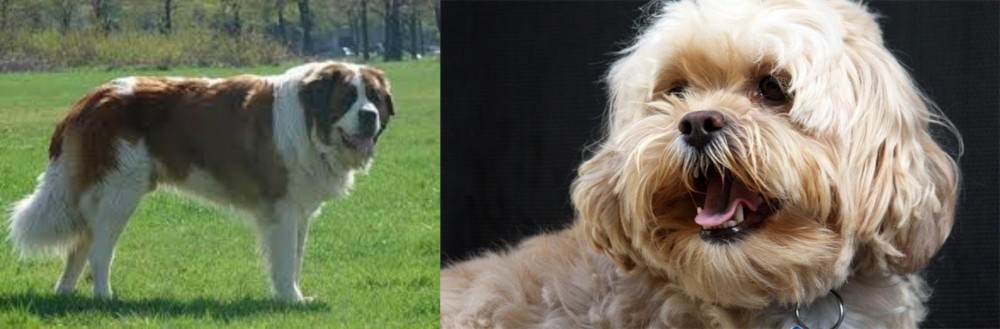 Moscow Watchdog vs Lhasapoo