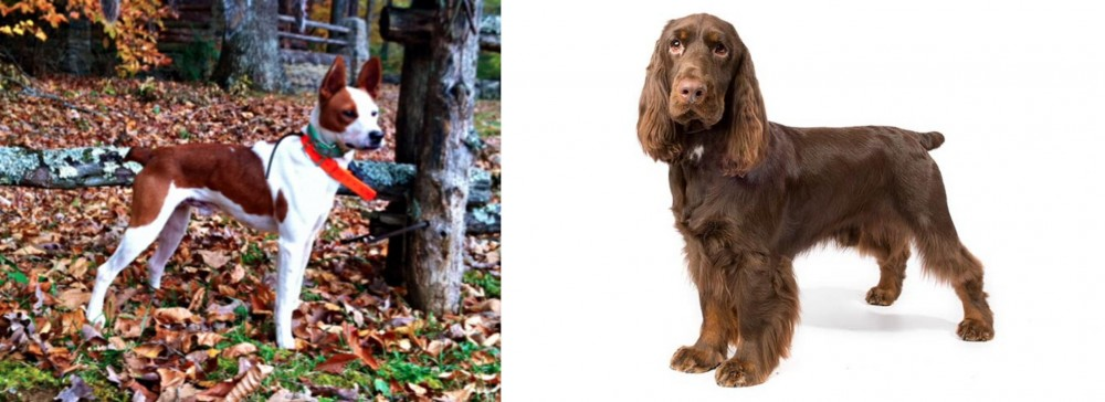 Mountain Feist vs Field Spaniel
