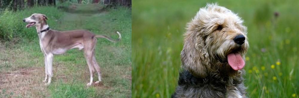 Mudhol Hound vs Otterhound