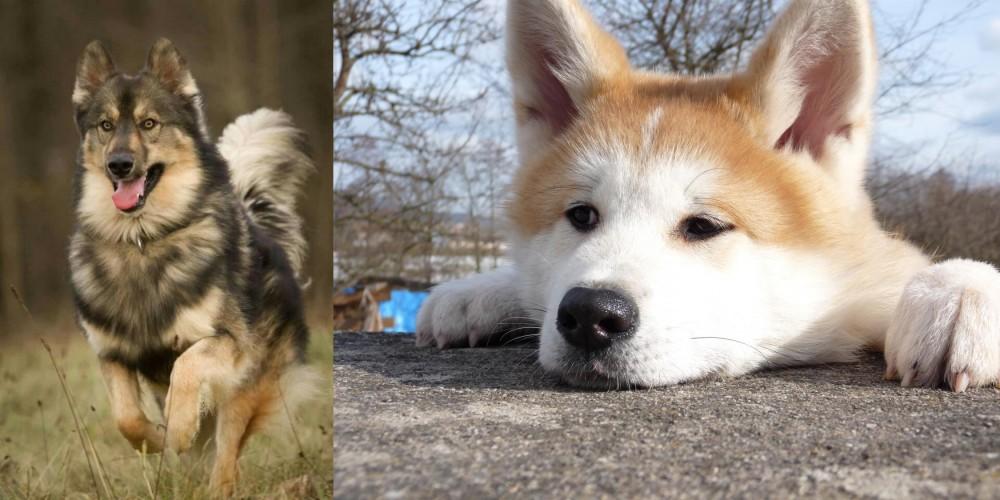 Native American Indian Dog vs Akita