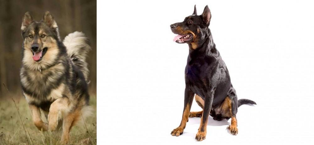 Native American Indian Dog vs Beauceron