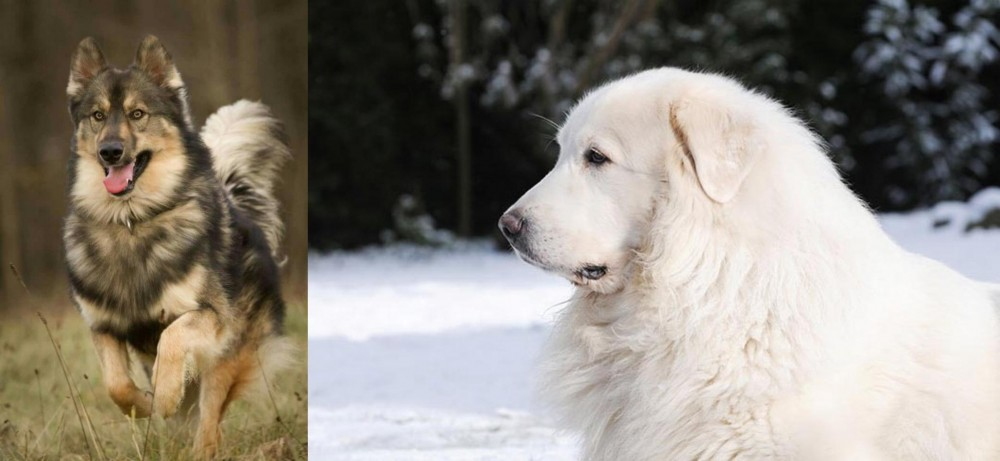 Native American Indian Dog vs Great Pyrenees