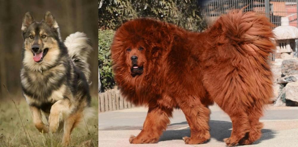 Native American Indian Dog vs Himalayan Mastiff