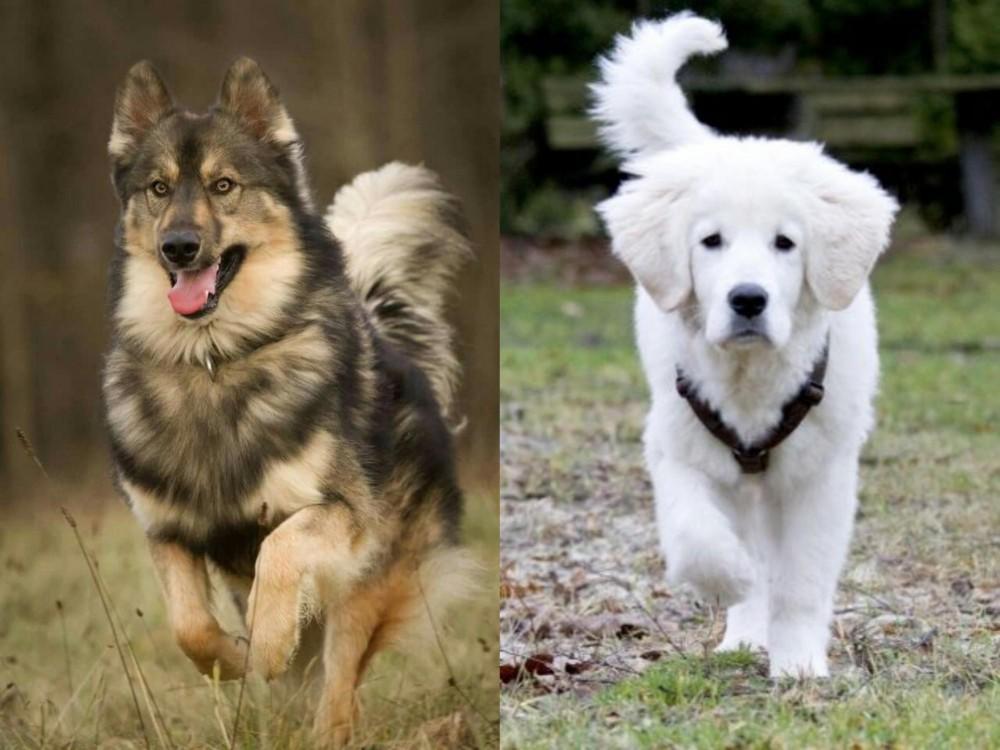 Native American Indian Dog vs Polish Tatra Sheepdog