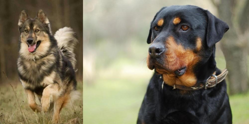 Native American Indian Dog vs Rottweiler
