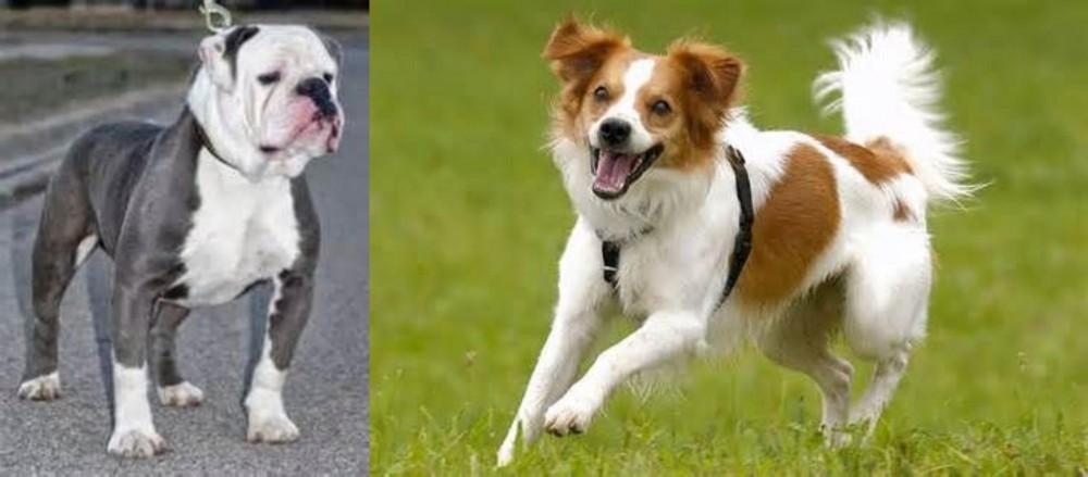 Old English Bulldog vs Kromfohrlander