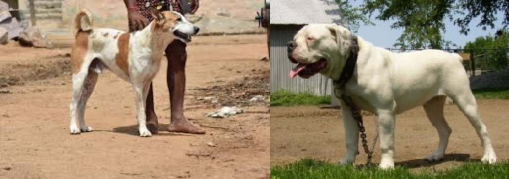 Pandikona vs Hermes Bulldogge