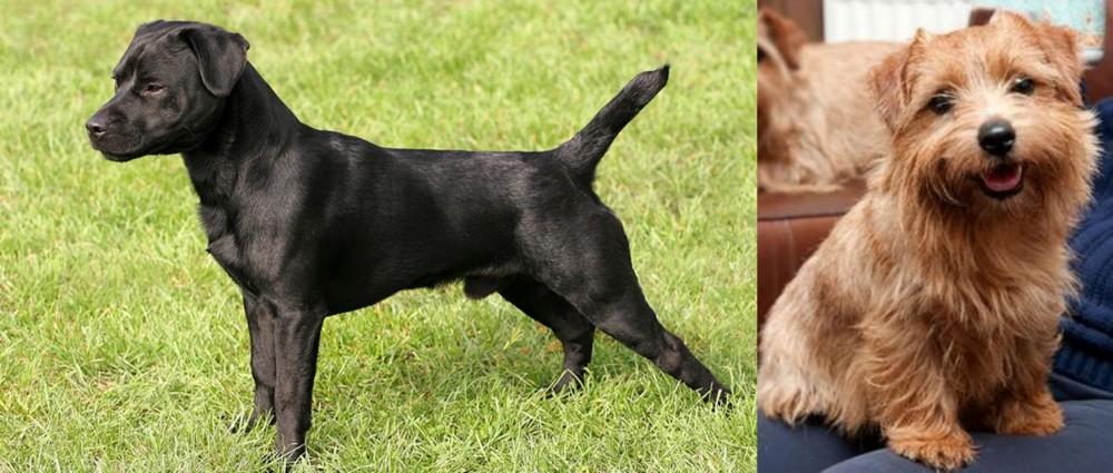 Patterdale Terrier vs Norfolk Terrier