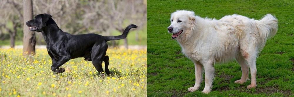 Perro de Pastor Mallorquin vs Abruzzenhund