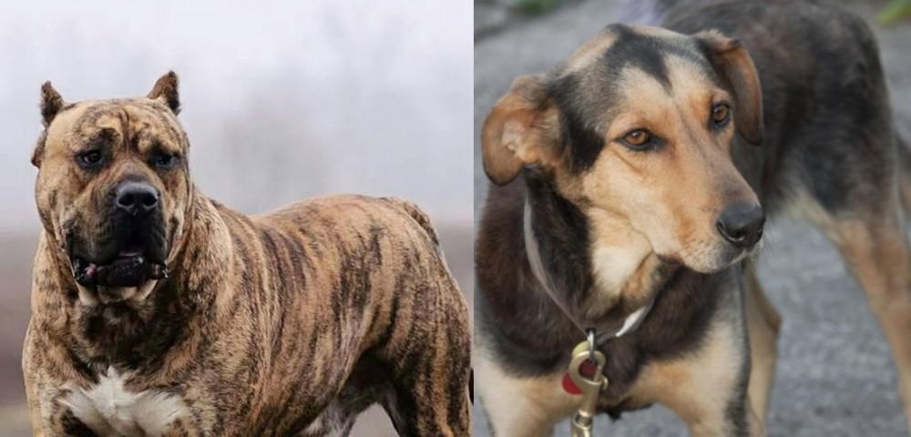 Perro de Presa Canario vs Huntaway