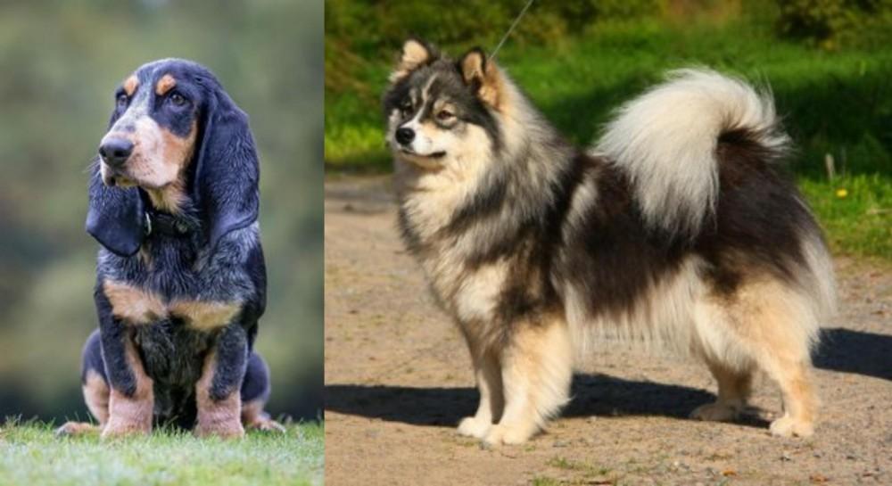 Petit Bleu de Gascogne vs Finnish Lapphund